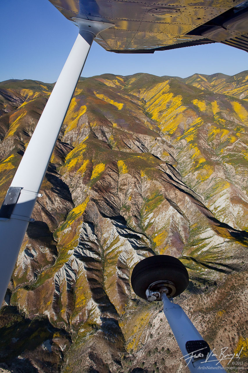 Temblor Range Aerial Wildflowers, Carrizo Plains National Monument, California, spring from the air, spring, cessna, , photo