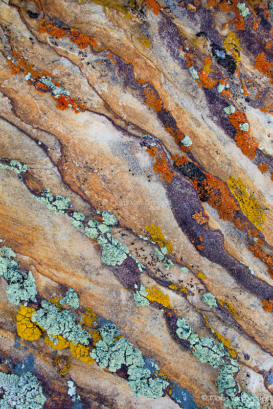 Colorful Lichen, BLM land, Utah, photo