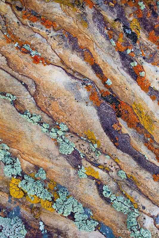 Colorful Lichen, BLM land, Utah, photo