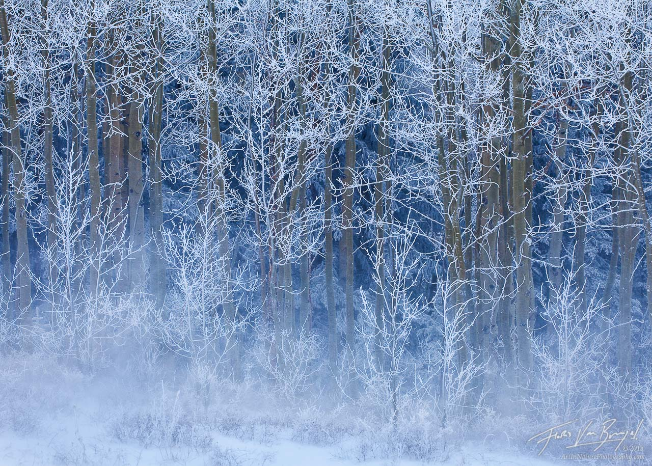 Rime Ice Aspens, Boulder Mountain, Utah, winter, photo