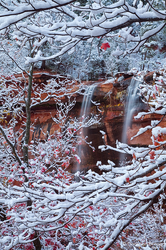 Fall Color Fresh Snow and Emerald Pools Waterfalls, Zion National Park, Utah, transitions, winter, emerald pools, photo