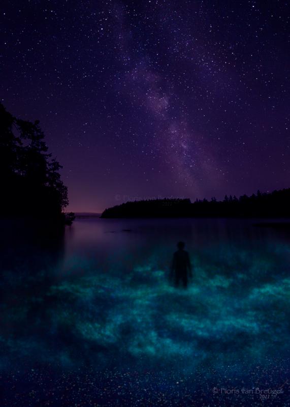 Bioluminescence, San Juan Islands, Noctiluca scintillans, dinoflagellates, night, washington, photo