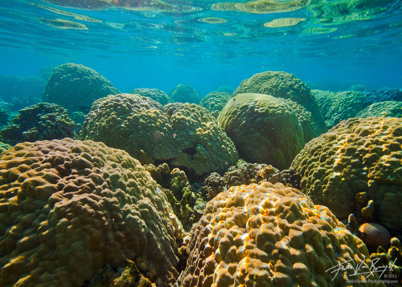 Tropical Corals, Ofu, American Samoa, photo