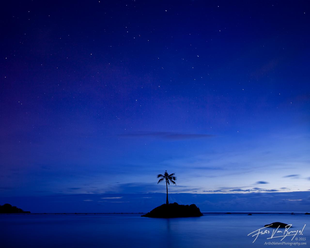 Coconut Tree, Tutuila, American Samoa, photo