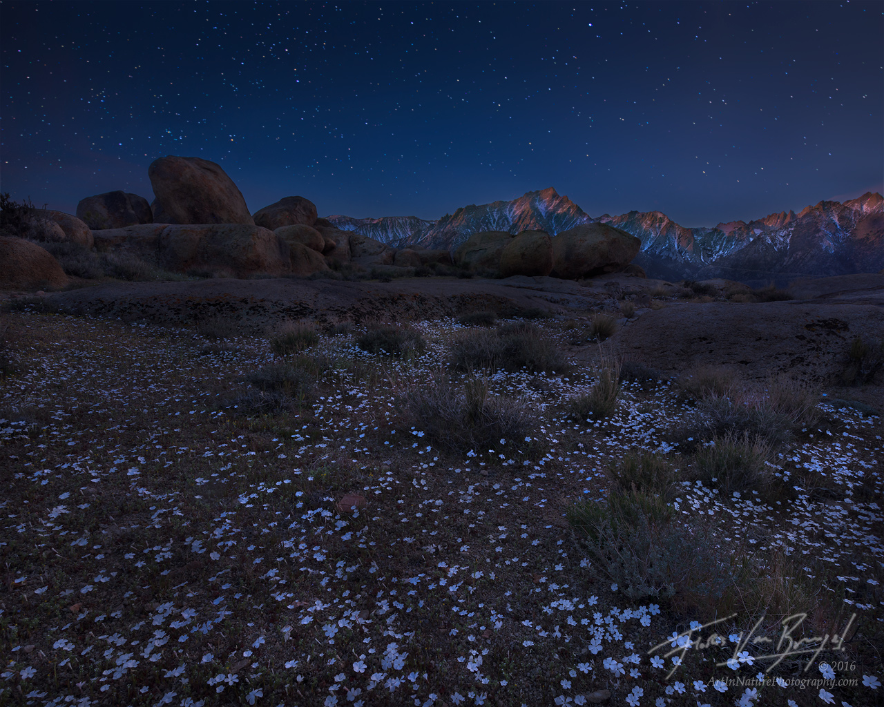 Flowers and Stars, Alabama Hills, California, photo
