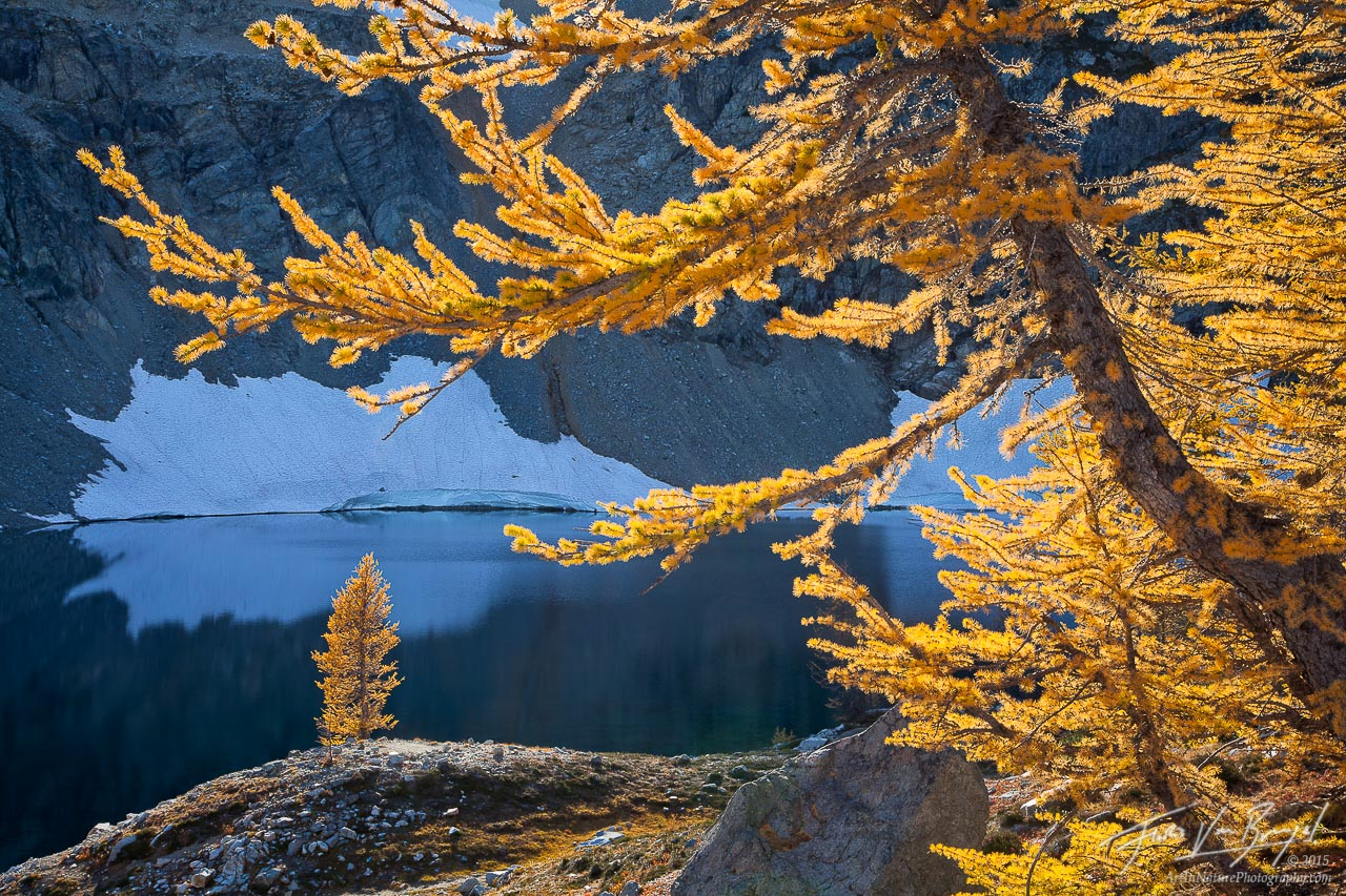 Autumn Larches, North Cascades, Washington, photo