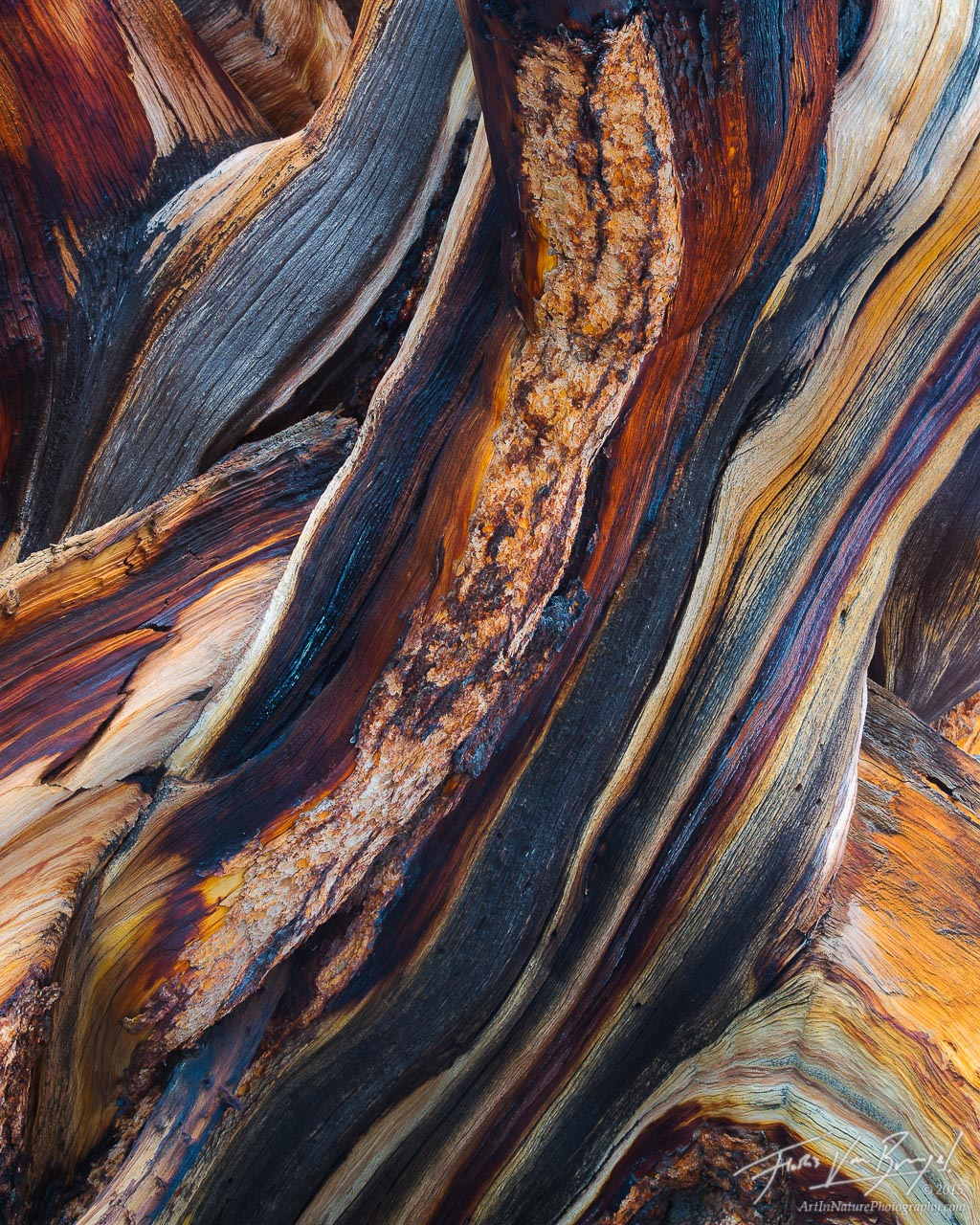 Bristlecone Wood Abstract, White Mountains, California, photo