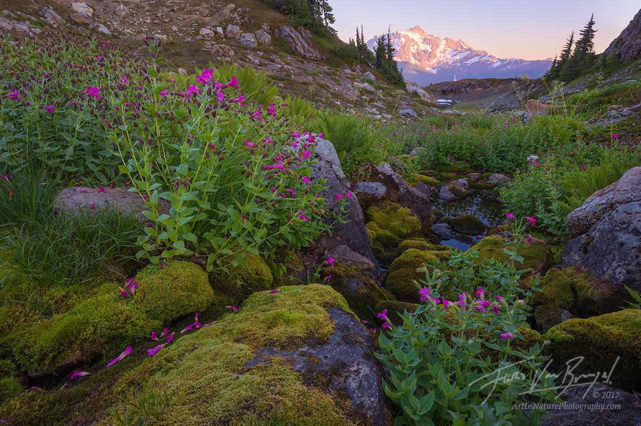 Summer Flowers, Cascades, Washington, photo