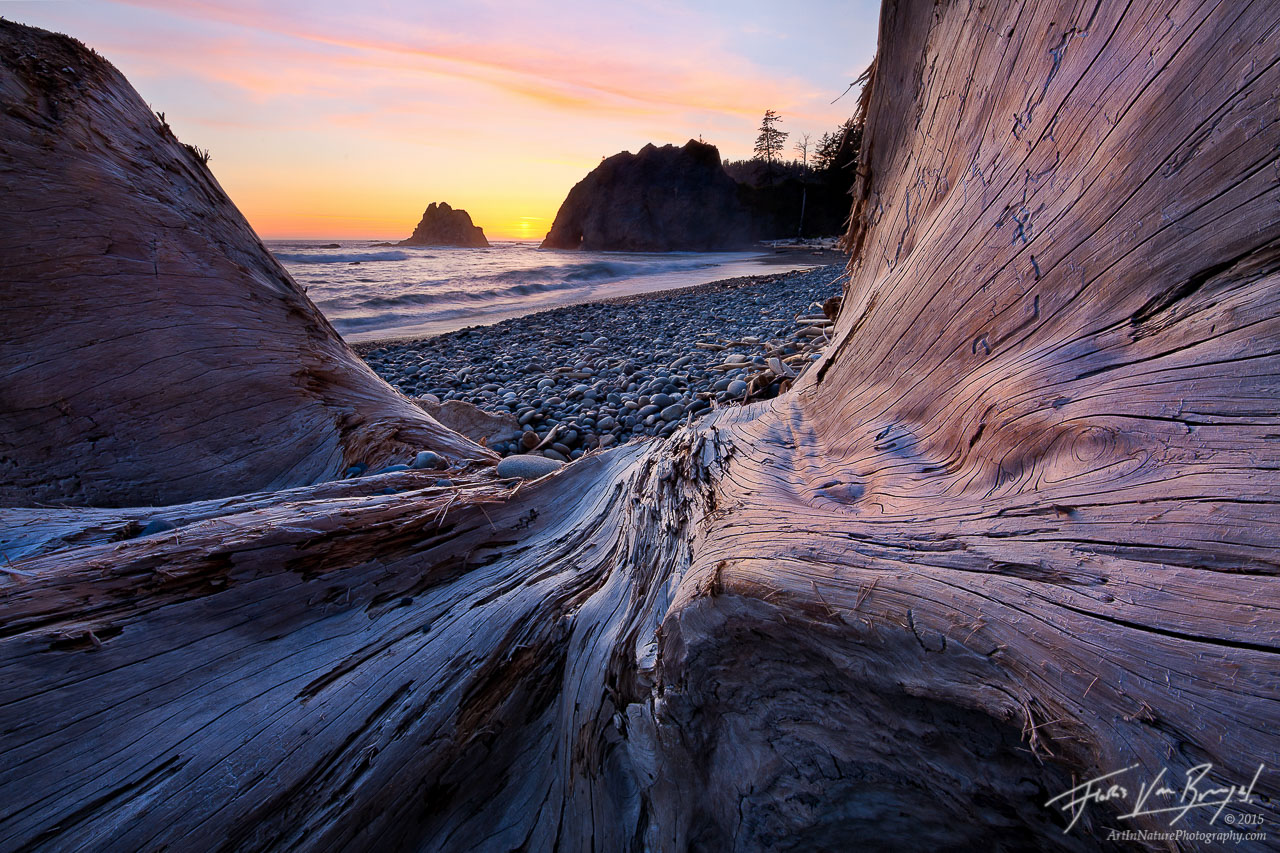 Driftwood on Olympic Coastline, Rialto Beach, Washington, photo