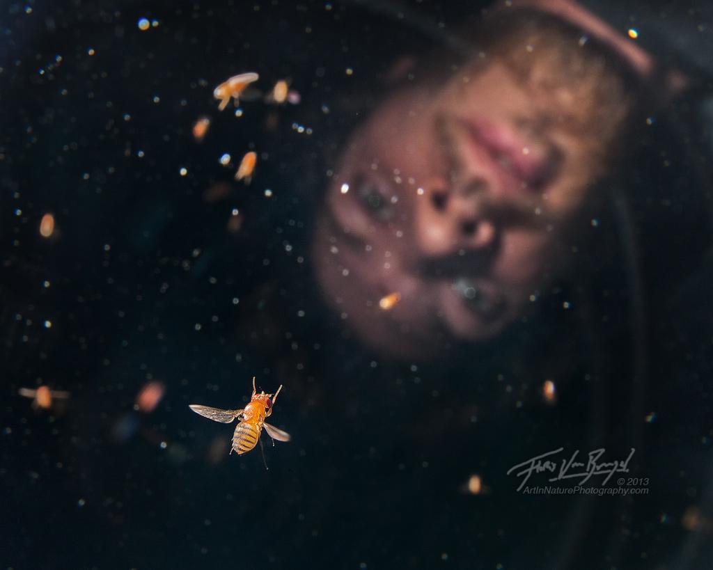 Drosophila Researcher, Floris van Breugel, fruit fly, photo