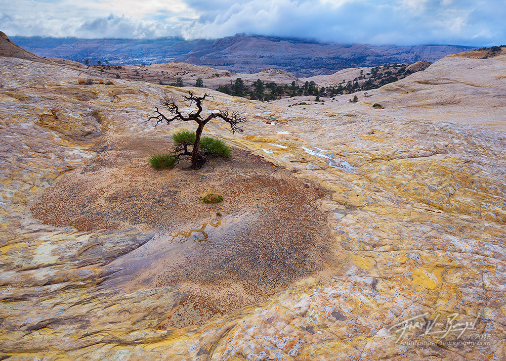 Solitude, Slickrock, Escalante, photo