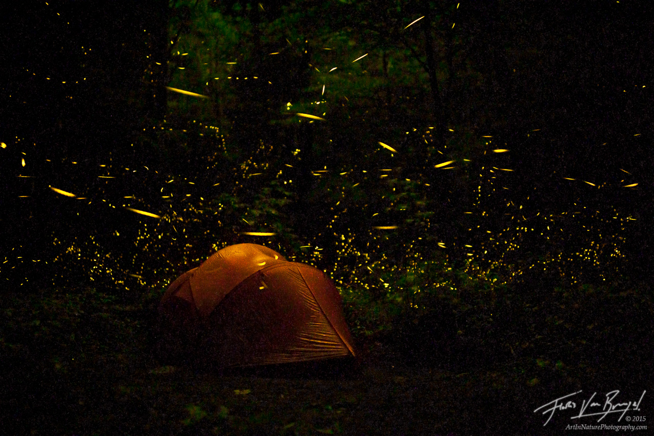 Camping with Fireflies, Smoky Mountains, Tennessee, photo