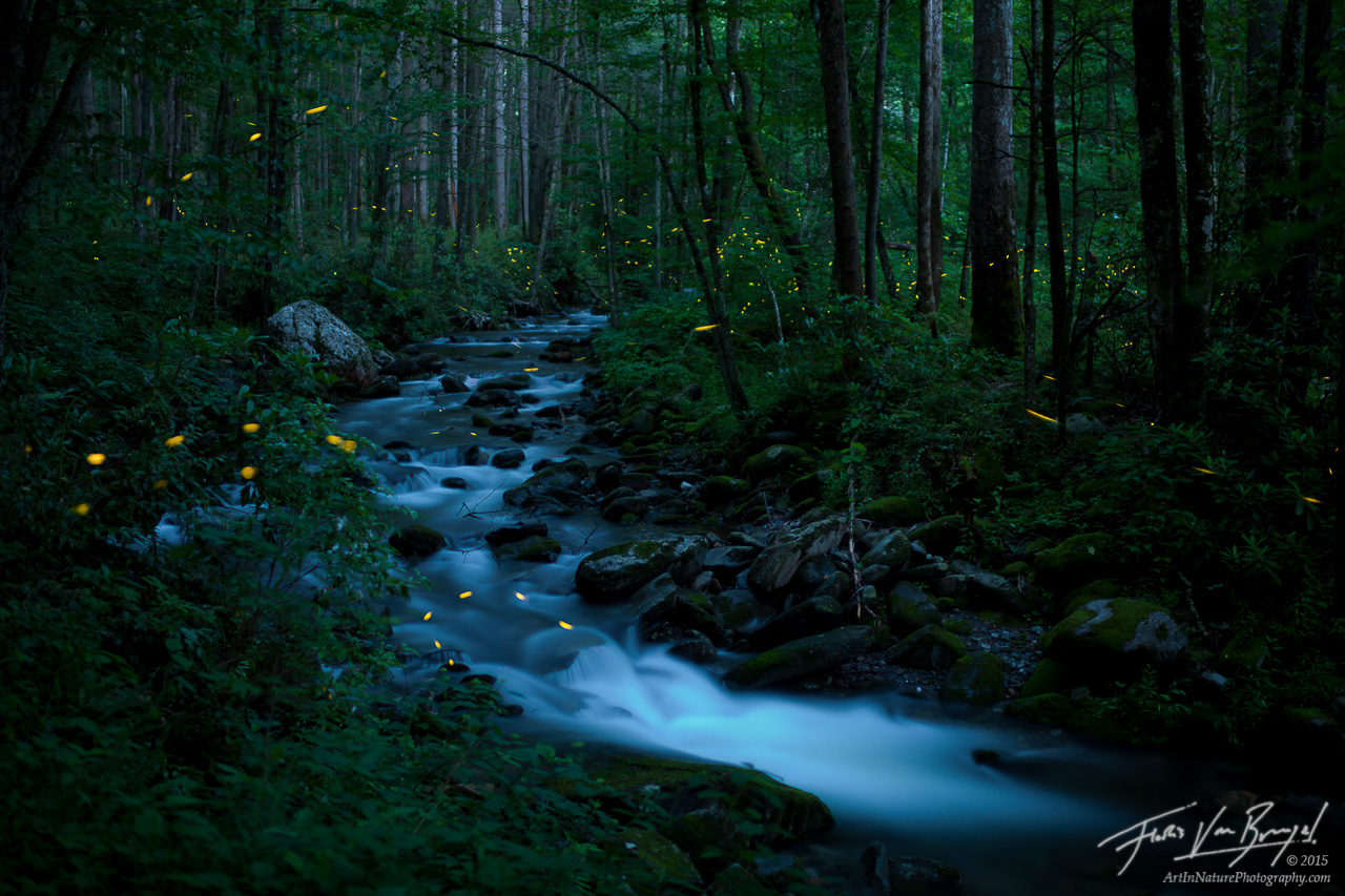 Fireflies Smoky Mountains, Synchronous, Tennessee, photo