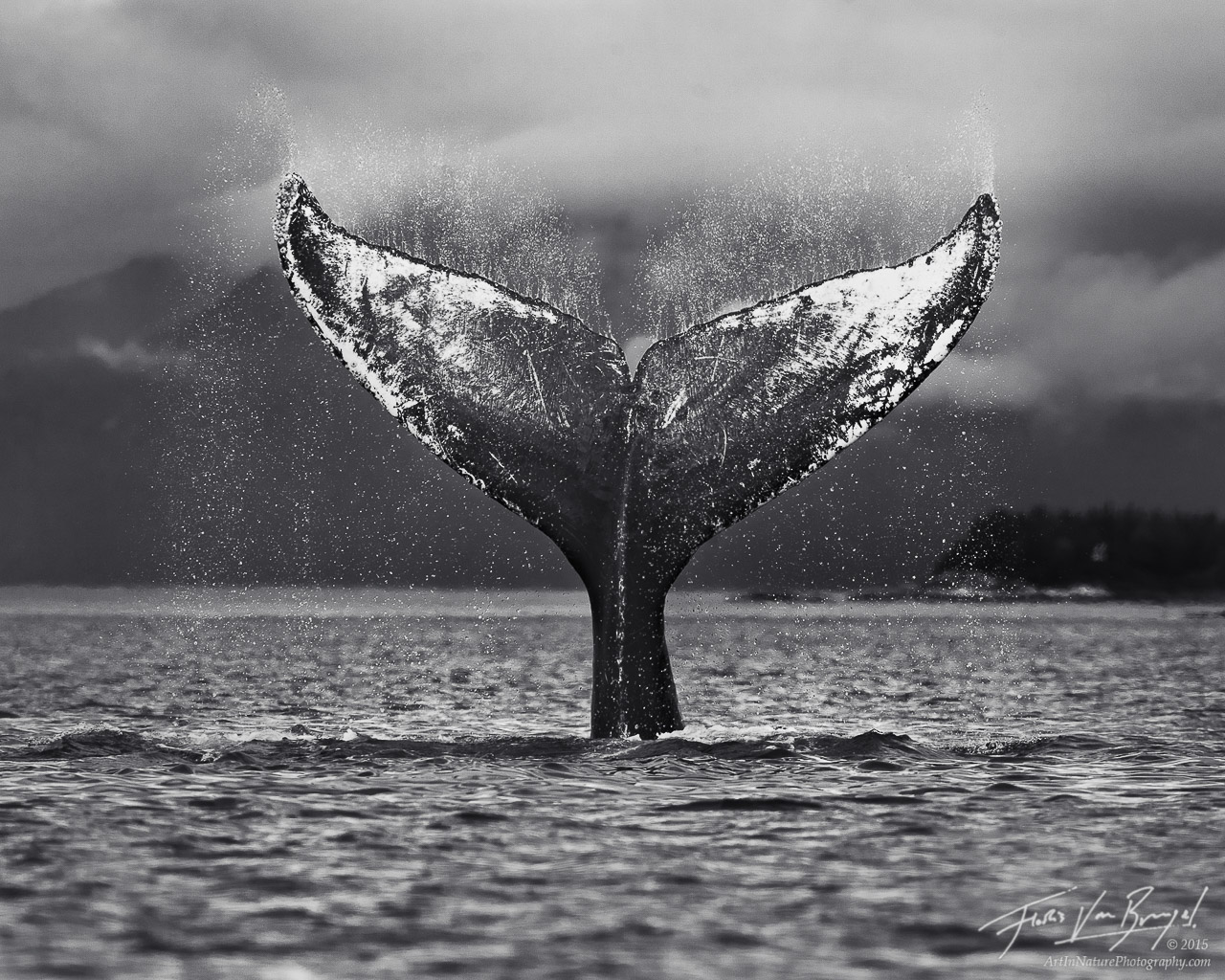 Humpback Whale Tail Flip, Glacier Bay National Park, Alaska, photo