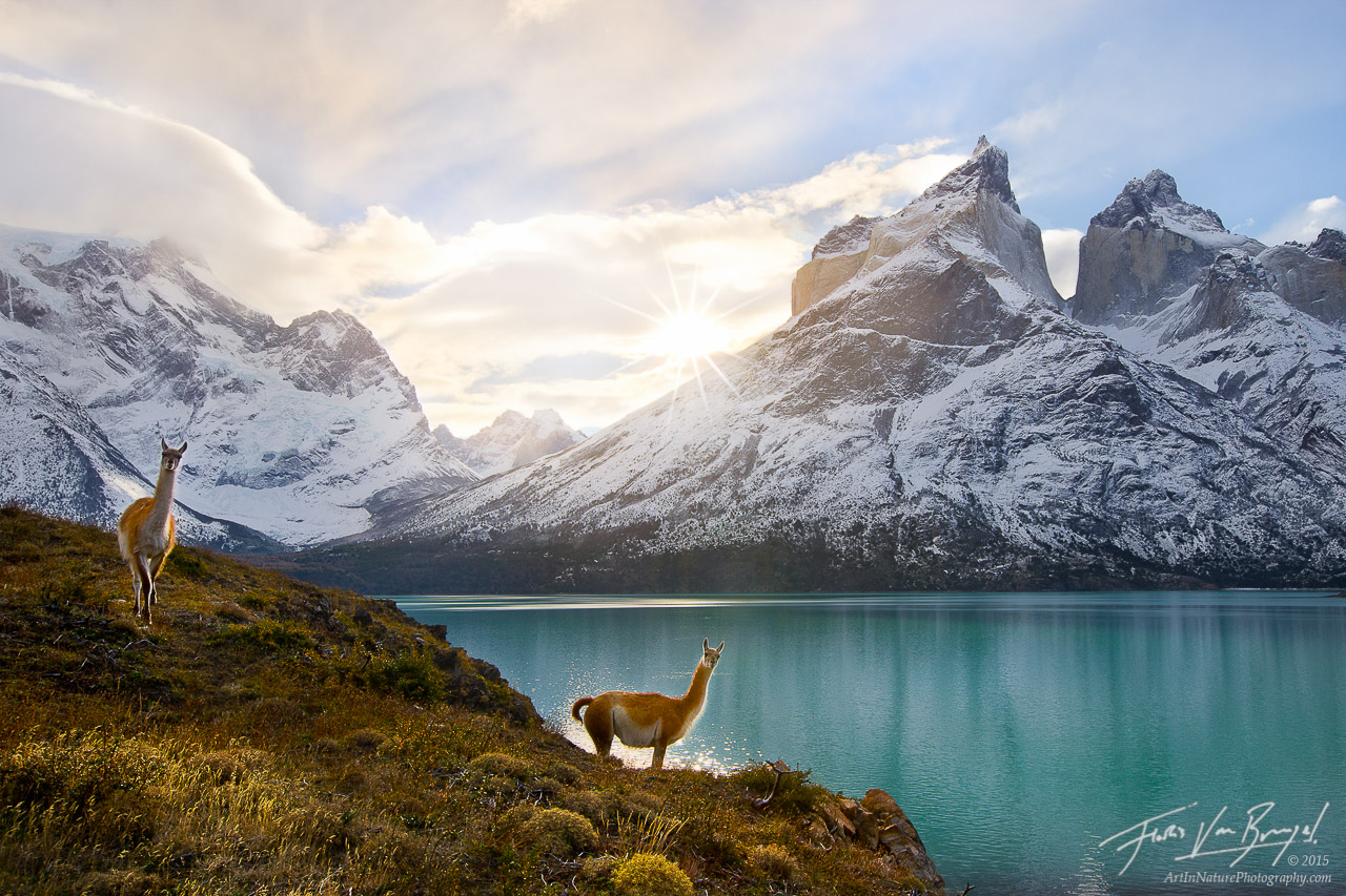 Guanacos, Torres del Paine National Park, Cuernos del Paine, photo