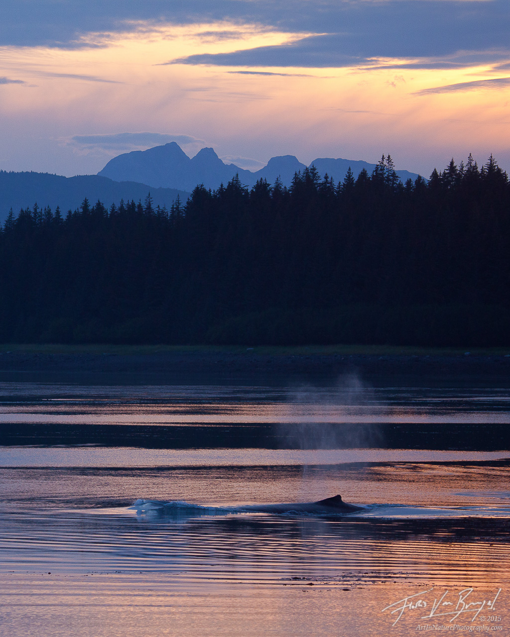 Humpback Whale Breathing at Sunset, Beardslee Islands, Alaska, photo