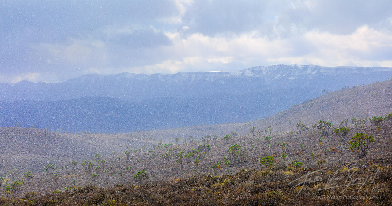 Snowstorm, Joshua Trees, Death Valley National Park, photo