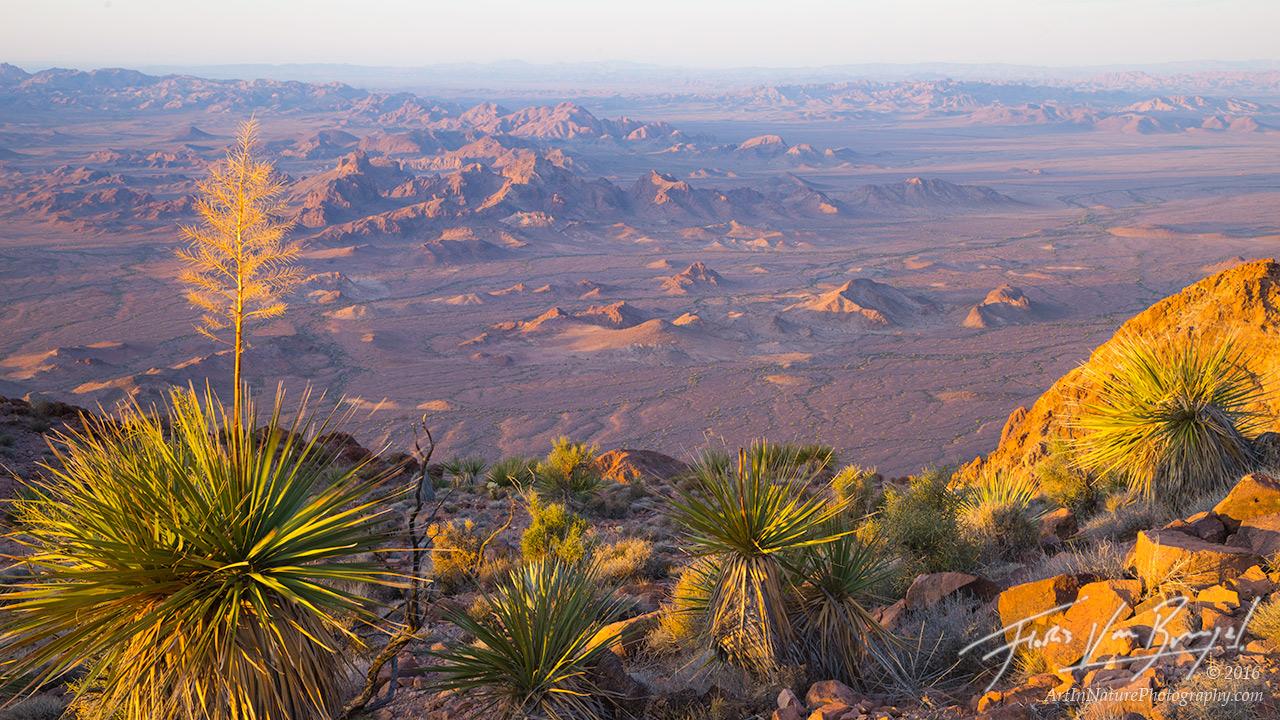 Kofa View, Yucca, Sunrise , photo