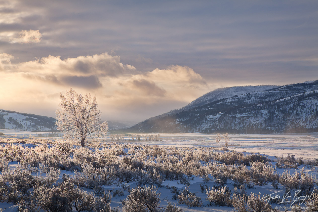 Frosted Trees, Lamar Valley, Yellowstone National Park, photo