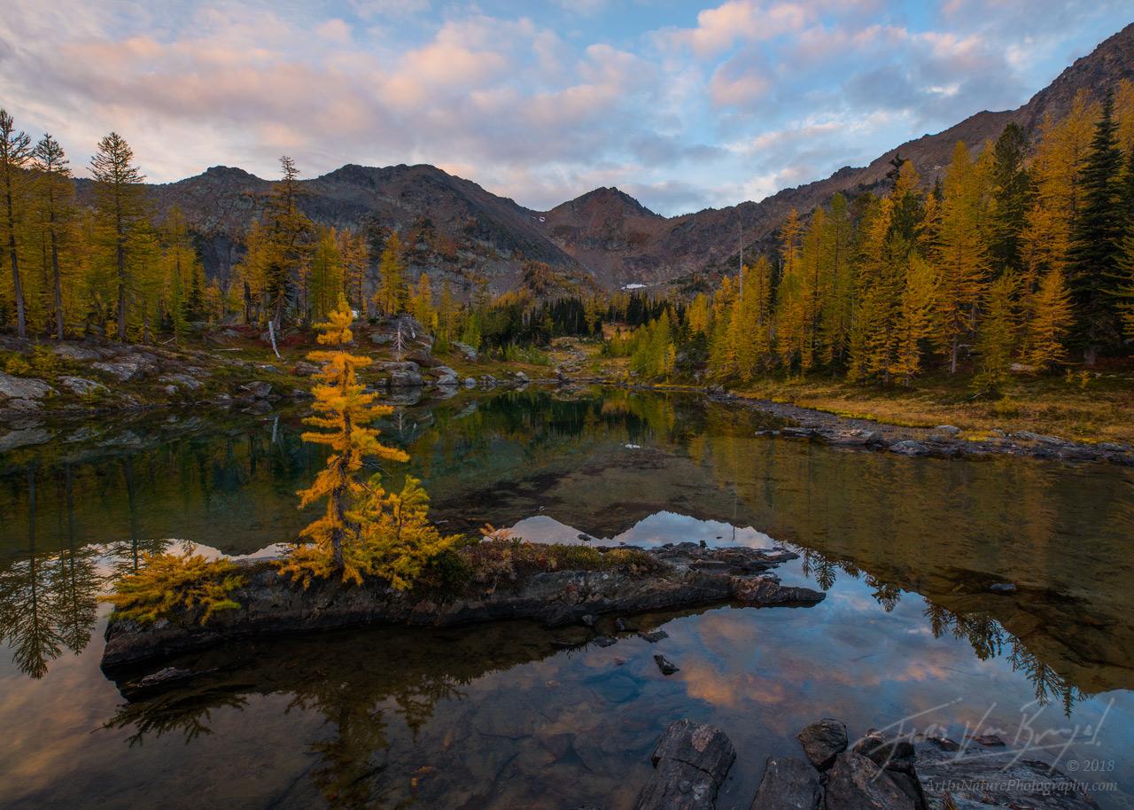 Larch, Autumn, Cascades, photo