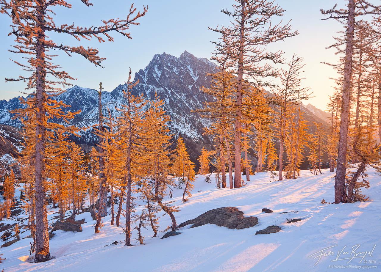 Mount Stewart, Autumn Larches, Snow, photo
