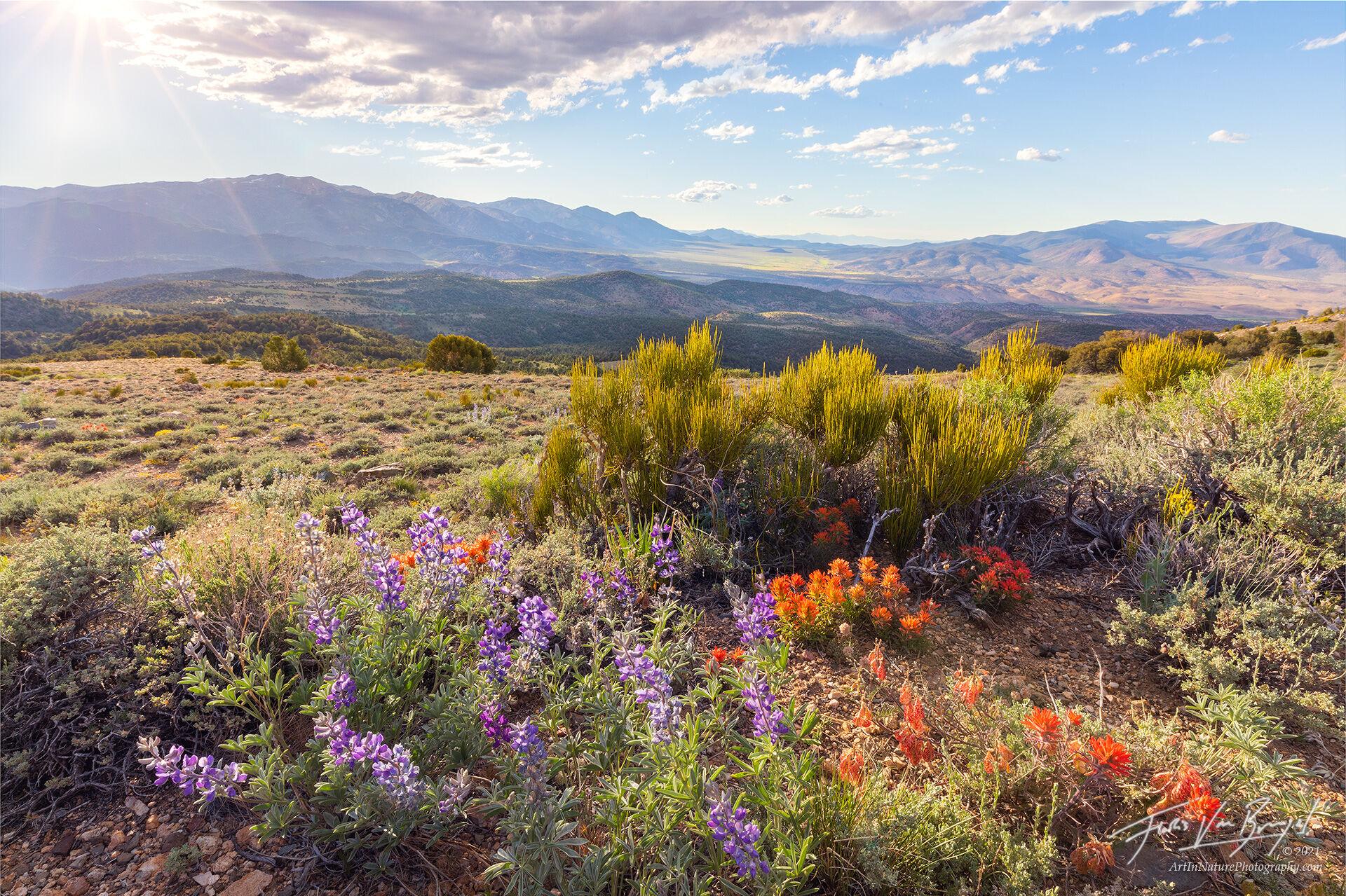 spring, desert, bodie hills, photo