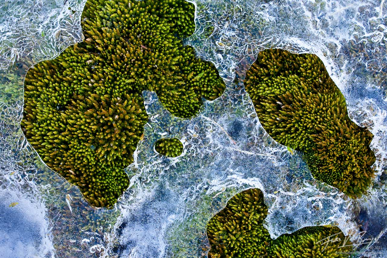 Moss and Ice, North Cascades National Park, Washington, photo