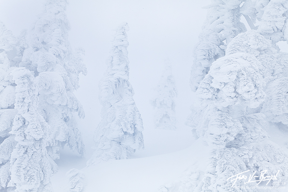 Frosted Ghost Trees, Mount Seymour, British Columbia, photo