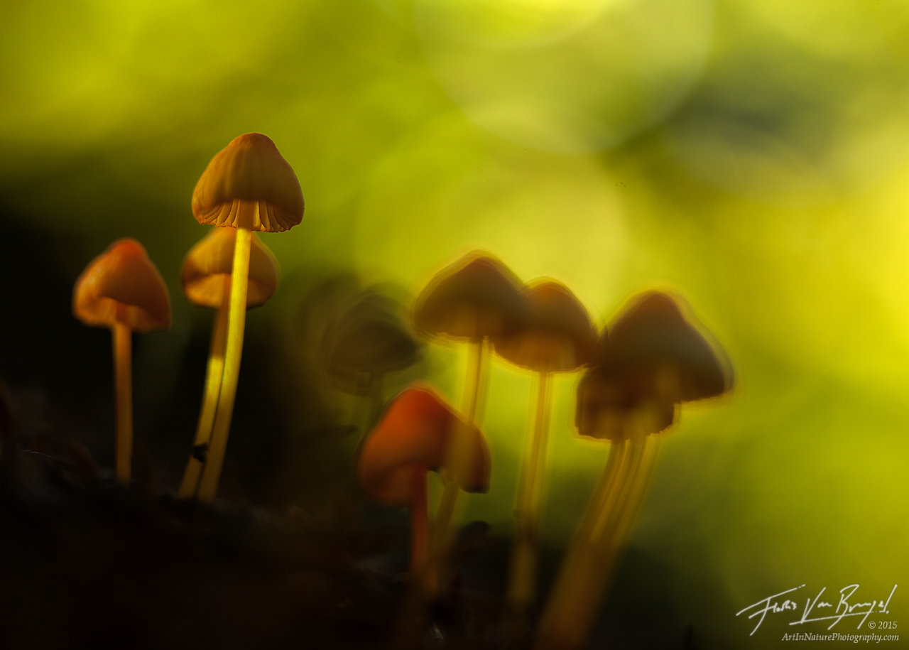 Mushrooms, Cascades, Autumn, photo