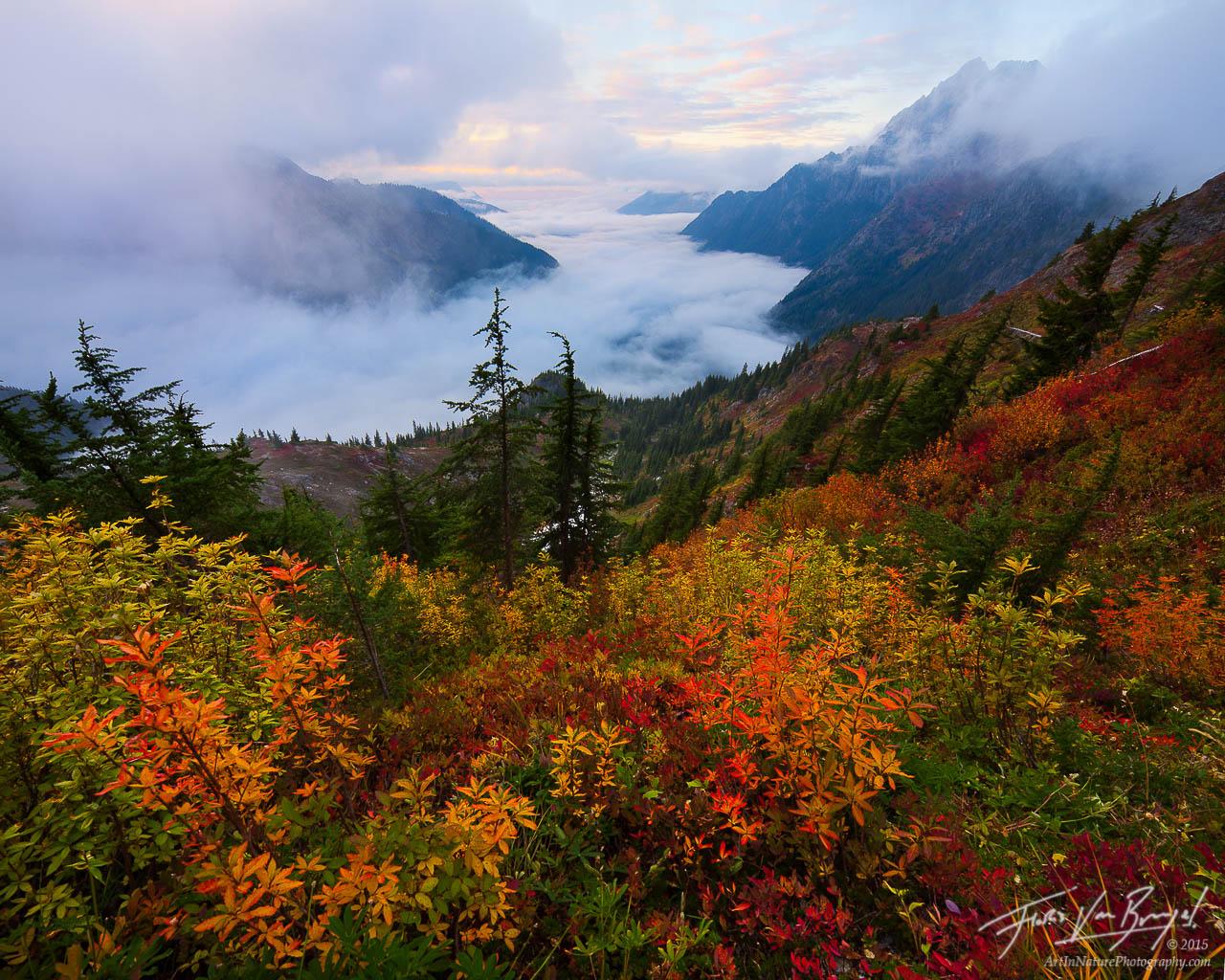 North Cascades Autumn Foliage, Mist Valley, Washington, photo