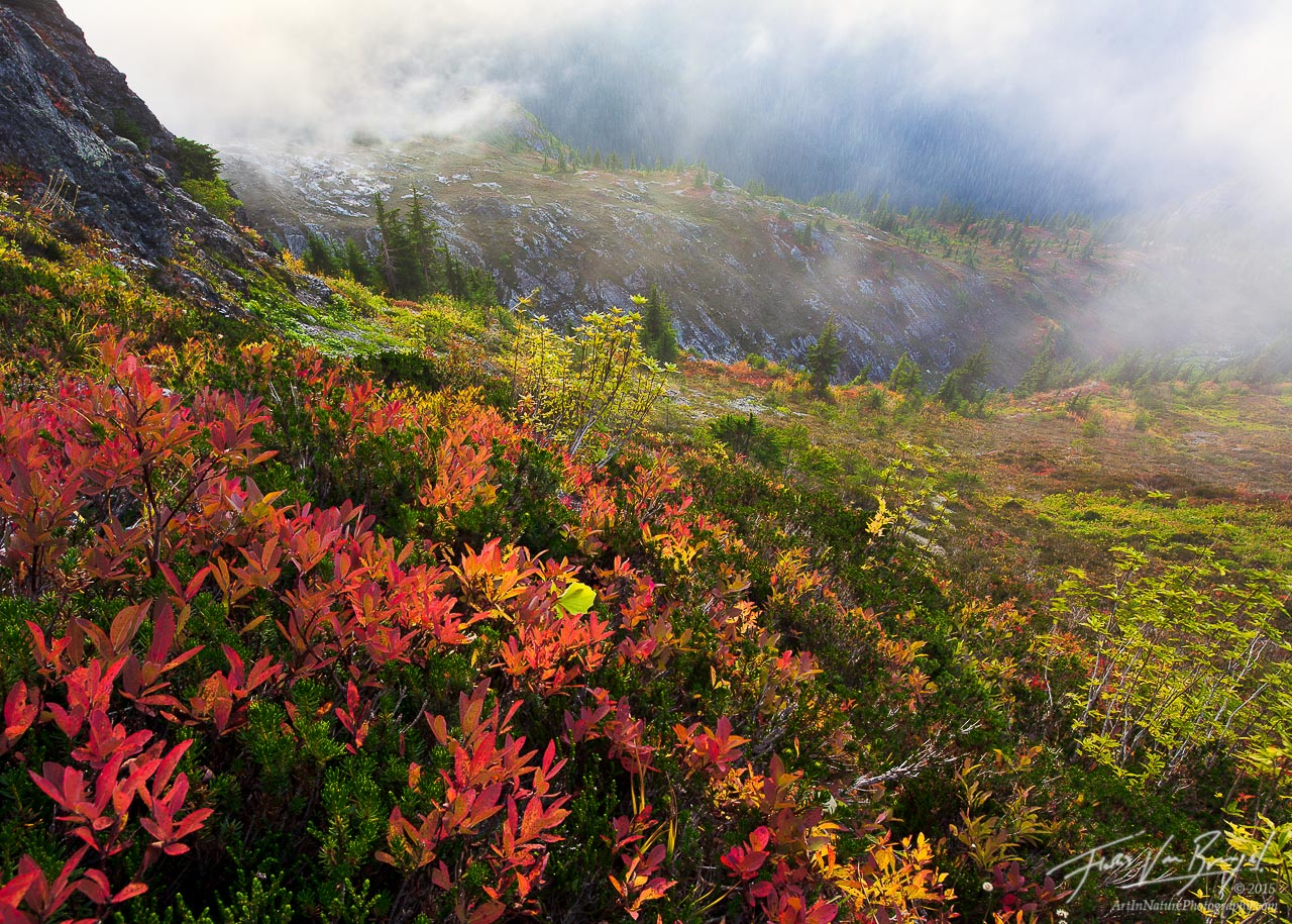 Fall Color North Cascades, Mist and Mountains, Washington, photo