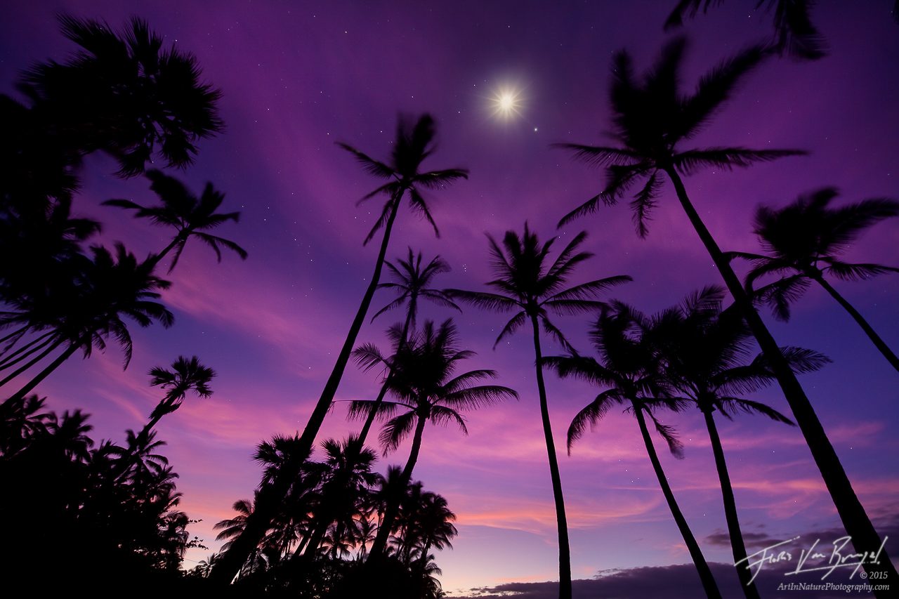 Palm Trees, Punalu'u, Hawaii, moon, stars, , photo