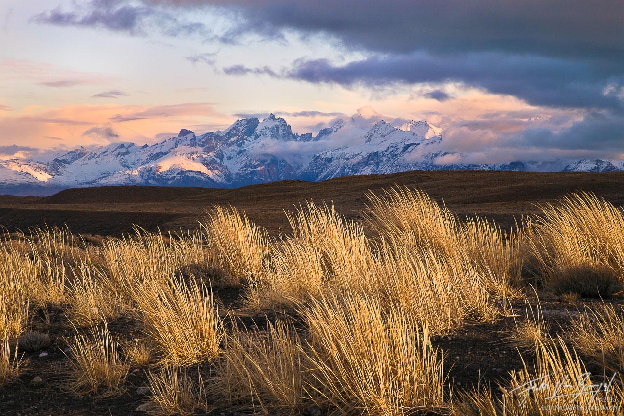 Grasses, Patagonia, Argentina, photo