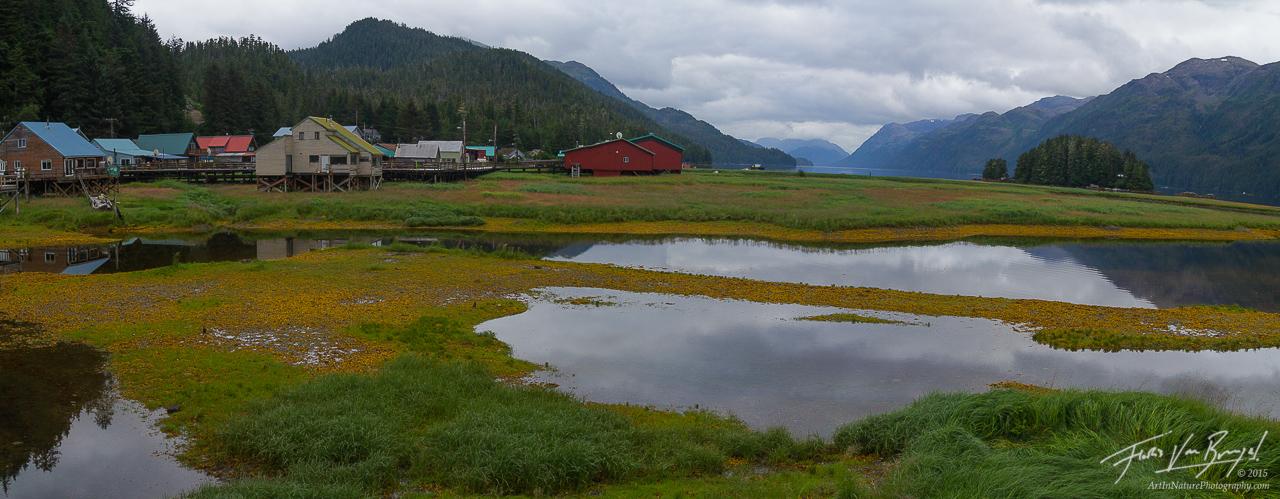 Pelican, Lisianski Inlet, Southeast Alaska, photo
