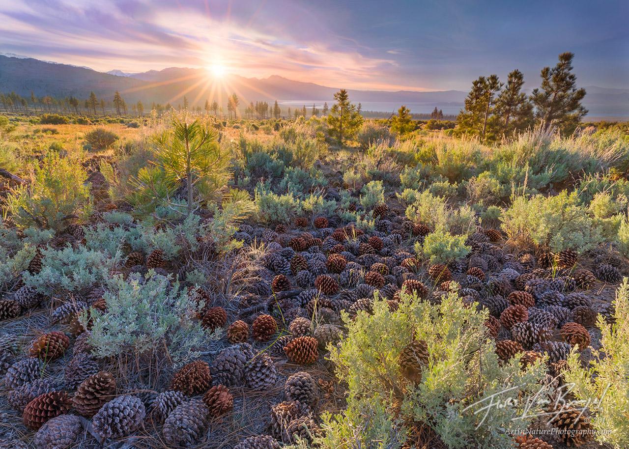 Pine Cones, Sagebrush, Owens Valley, photo