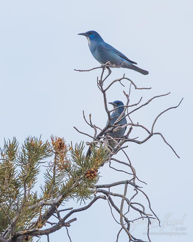birds, nevada, photo