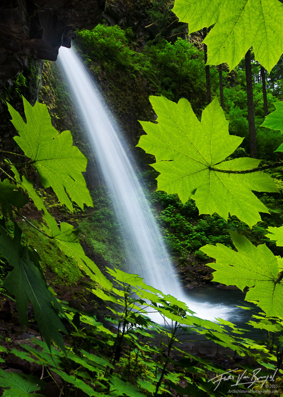 Ponytail Falls, Columbia River Gorge, Oregon, spring, photo