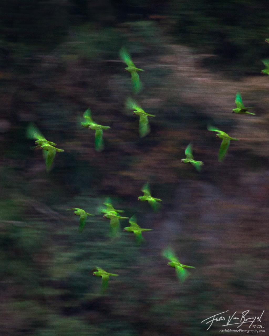 Parakeets, Sima de las Cotorras, Chiapas, photo