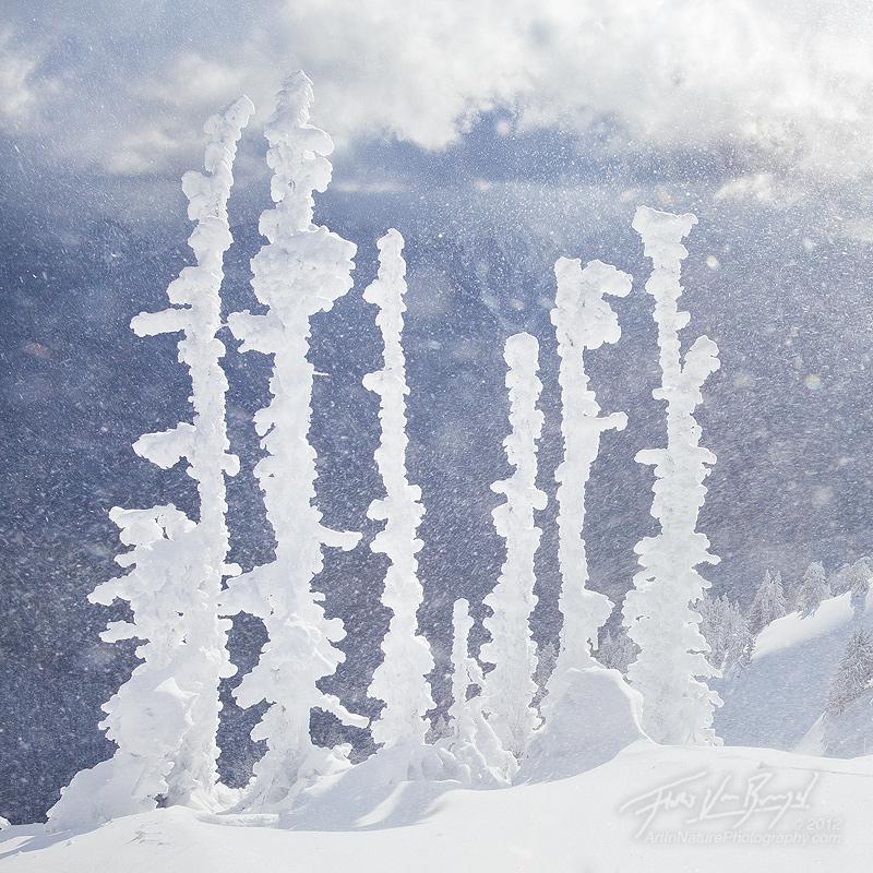 Winter Winds, Hurricane Ridge, Olympic National Park, photo