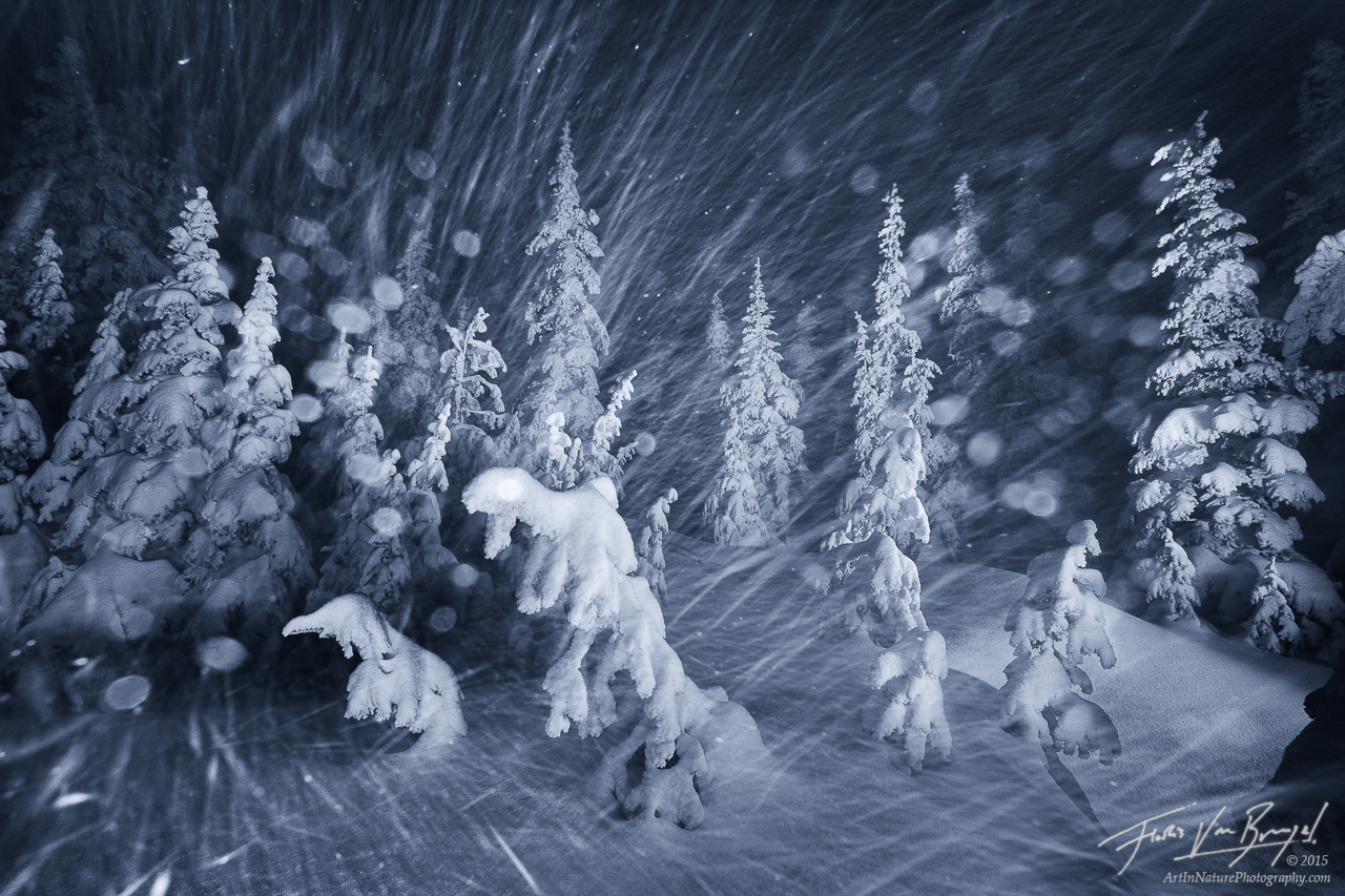 Winter Snowstorm, Hurricane Ridge, Olympic National Park, photo