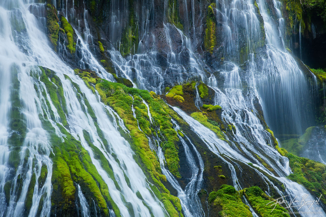 Rivulets and Mosses, Gifford Pinchot, Washington, photo