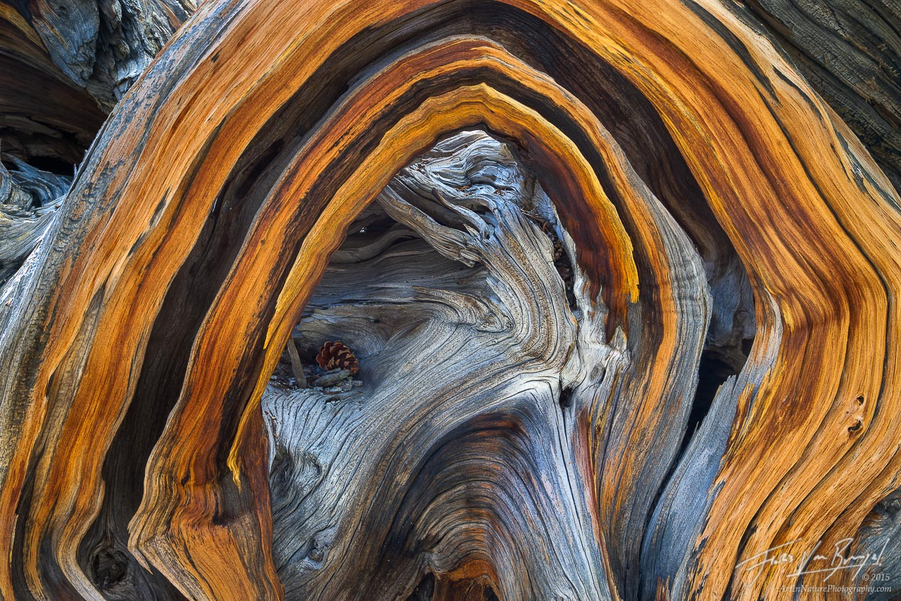 Wood Abstract, Sierra Nevada, California, photo