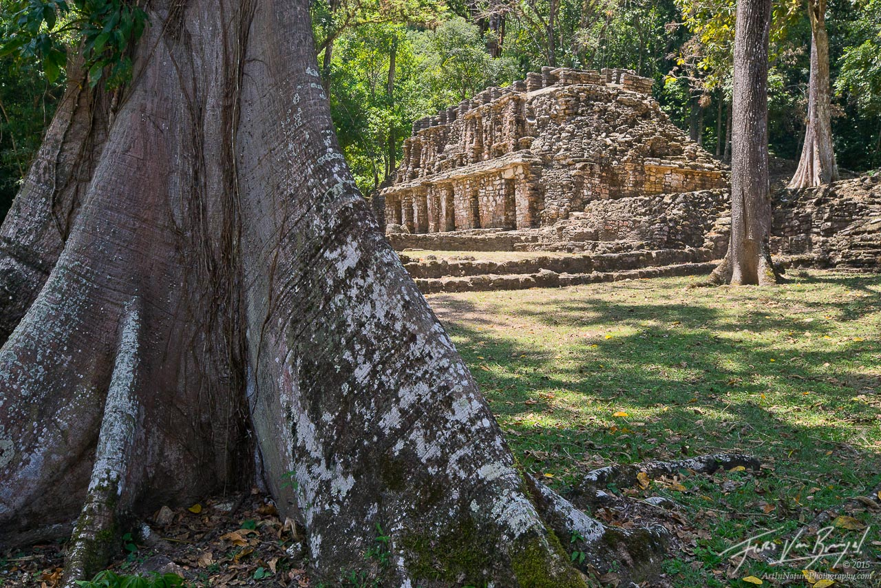 Yaxchilan Mayan Ruins, Chiapas, Mexico, photo