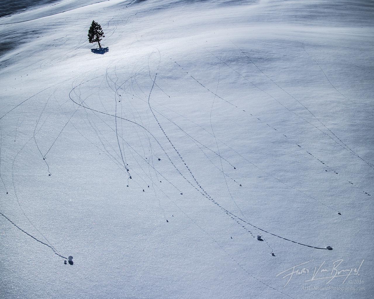 Yosemite, Snow, Abstract, photo